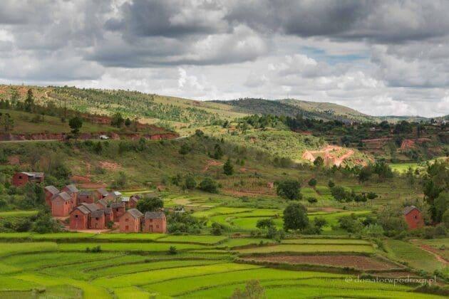 Pole ryżowe na Madagaskarze