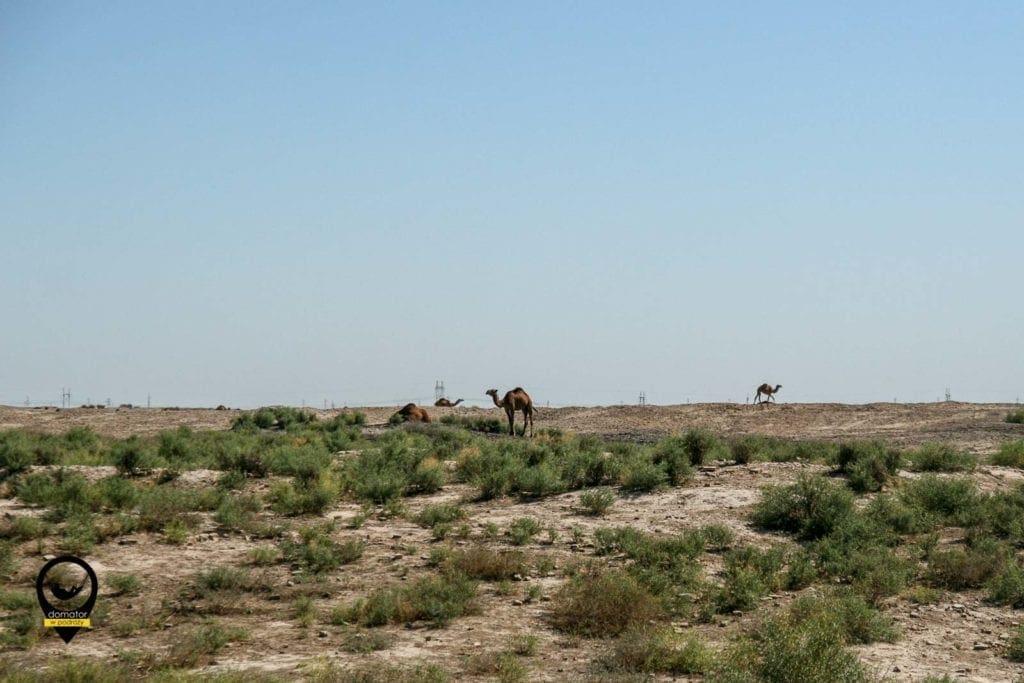 Osiemdziesiąt procent kraju zajmuje pustynia Kara Kum