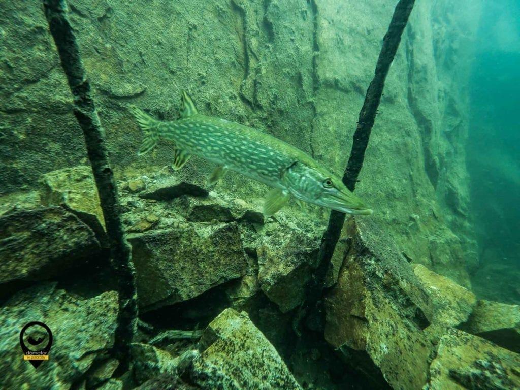 Kamieniołom Horka i lokalna fauna