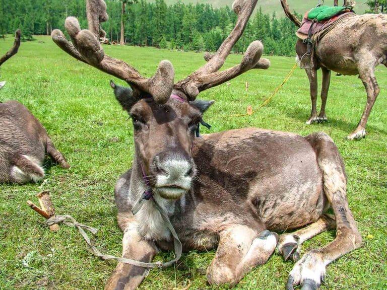 Chubsuguł – młodszy brat Bajkału